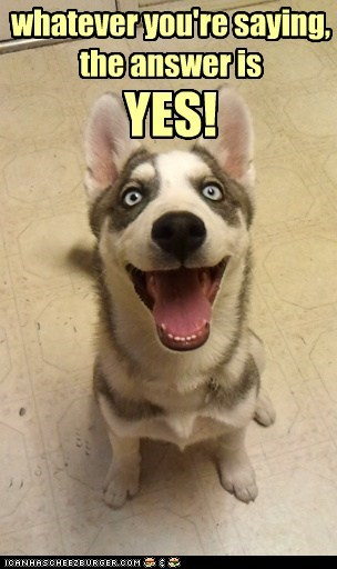 captions excited happy husky yes - 6489891072
