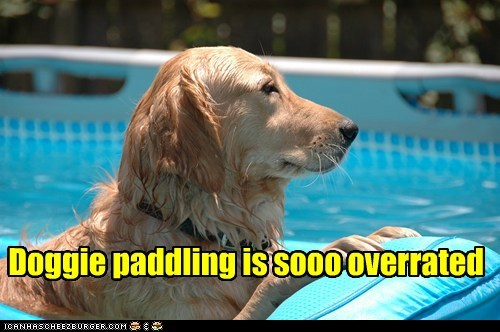 dogs doggie paddle floaty golden retriever swimming pool - 6489900800