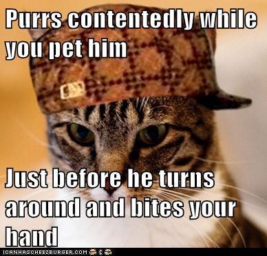 Scumbag Cat - 6489986560