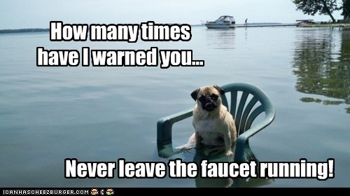 dogs,faucet,flood,lawn chair,oops,pug