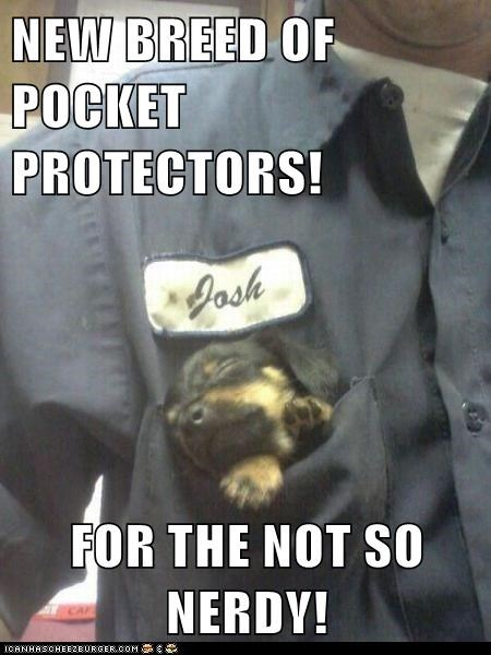dachshund,dogs,pocket,pocket protector,puppy,sleeping,uniform