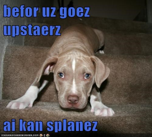 accident,dogs,i can explain,pitbull,puppy,stairs