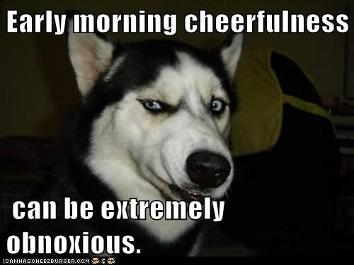 dogs grumpy huskie husky morning person obnoxious too early