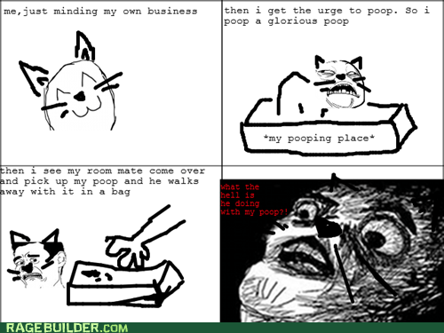 cat pooptimes Rage Comics raisin face - 6490694144