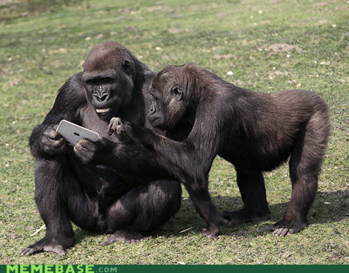 animals,apps,gorillas,ipad,Planet of the Apes