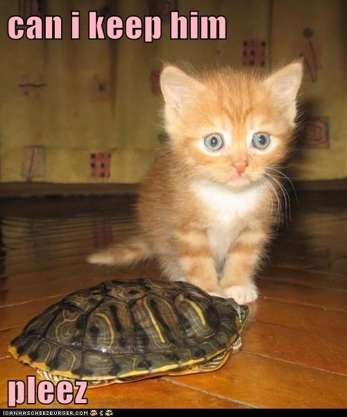 captions,Cats,friend,keep him,pet,turtle
