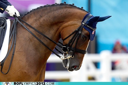 disappointment,dressage,horses,Rafalca,Romney