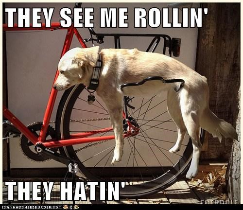 bicycling bike dogs haters lab rolling they see me rollin