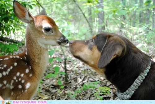deer,dogs,fawn,Interspecies Love,pet,reader squee