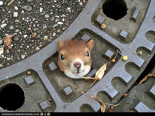 around the interwebs,manhole cover,people pets,squirrels,stuck