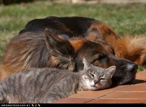cat dogs kittehs r owr friends lazy bones nap summer time - 6491099648