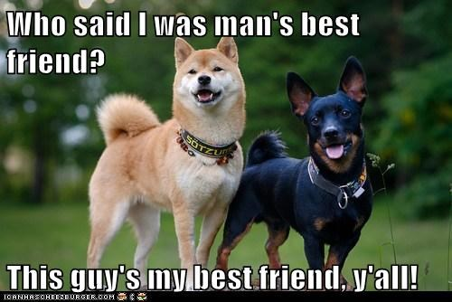 best friends dogs lancashire heeler man shiba inu smiles - 6491110912