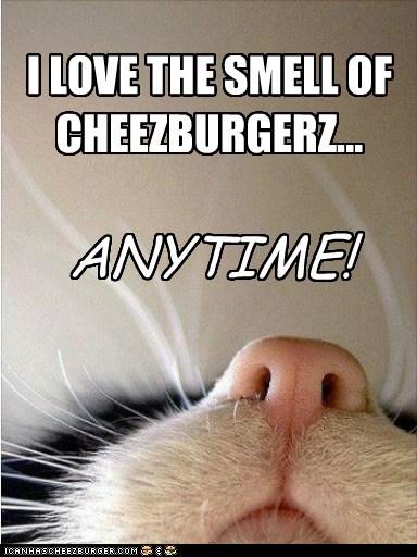 Cheezburger Image 6491181056