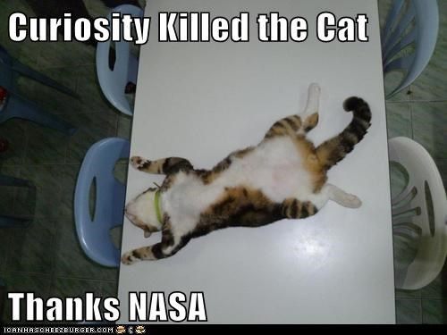 best of the week captions Cats curiosity curiosity killed the cat Mars nasa space