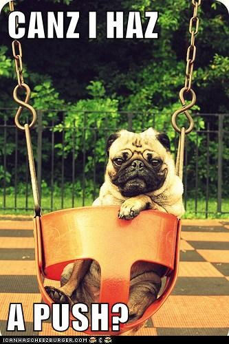 baby seat,dogs,pug,push,swing