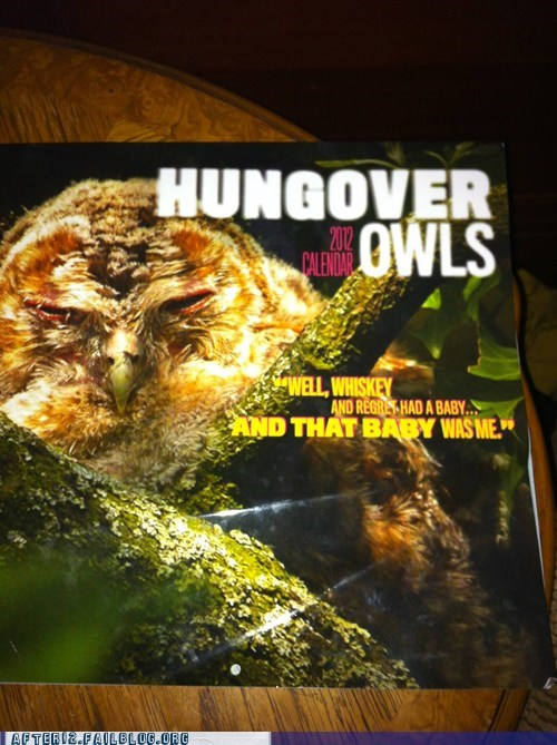 wtf Owl hungover funny after 12 g rated - 6491377408