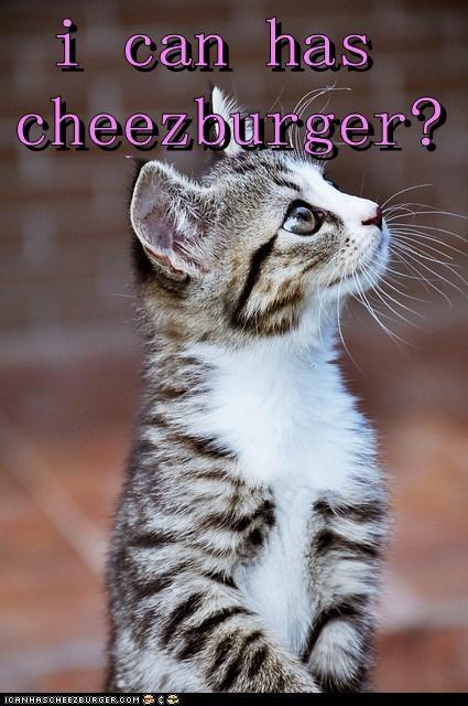 Cheezburger Image 6491608832