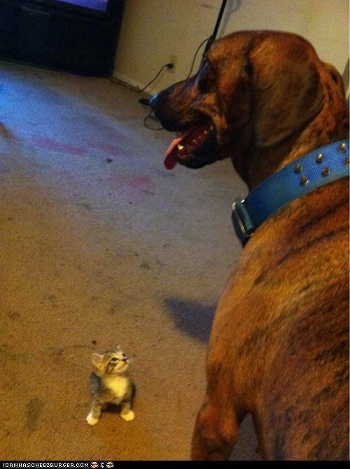 big Cats dogs goggies r owr friends Interspecies Love kitten size matters tiny - 6491716608