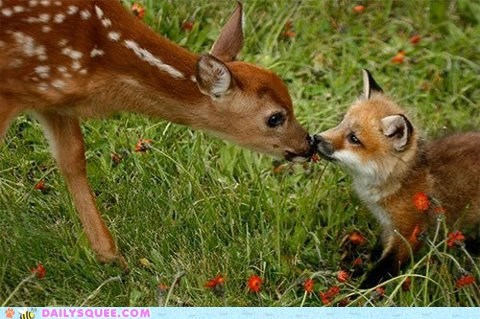 cub,deereh,fawn,fox,friends,Interspecies Love,sniff