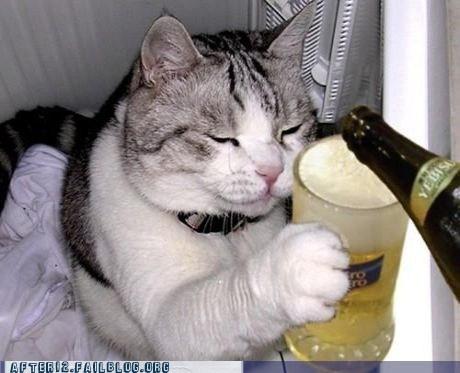 beer cat beer mug beer stein cat crunk critters - 6491816448