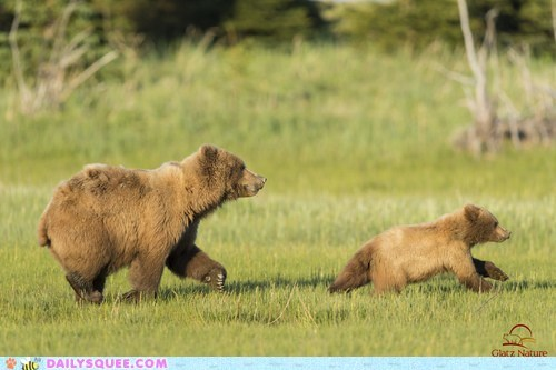baby,mama,chasing,bear,trouble,squee