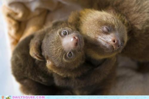 Babies Awkward hugs sloths squee - 6491824896