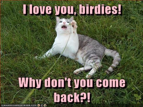 birds,captions,Cats,love,Predator,prey,run