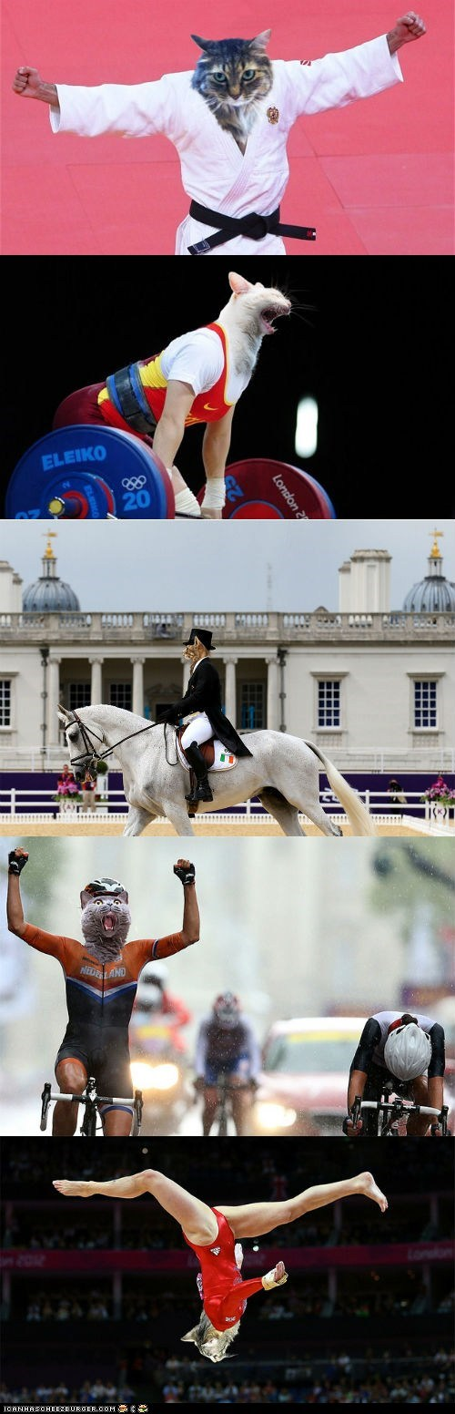 athletes,Cats,multipanel,olympics,photoshopped,sports