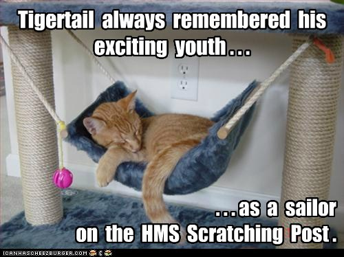 captions Cats hammock remember sailor ship sleep youth - 6491906816