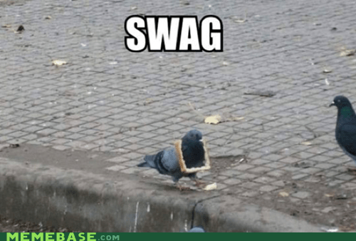 bread,pigeon,swag