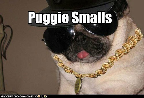 biggie smalls,Bling,captions,dogs,hip hop,notorious-b-i-g,pug,rapper,sunglasses