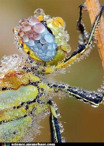 bug,droplets,Life Sciences,swimming,water