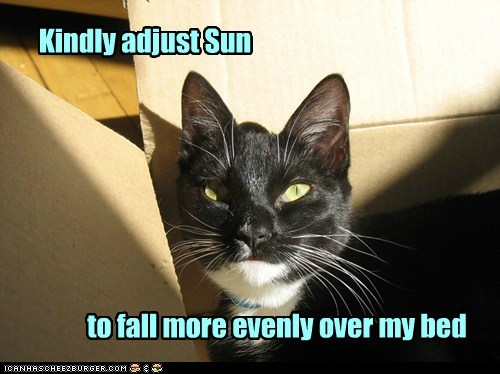 adjust,bed,captions,Cats,center of the universe,sun