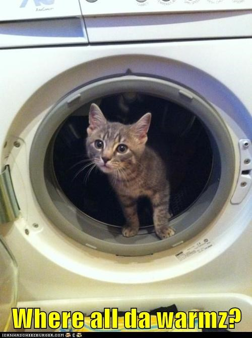captions Cats dryer laundry search warm where - 6492587008