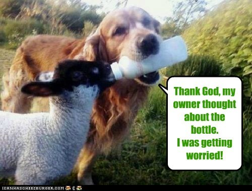 Thank God, my owner thought about the bottle. I was getting worried!