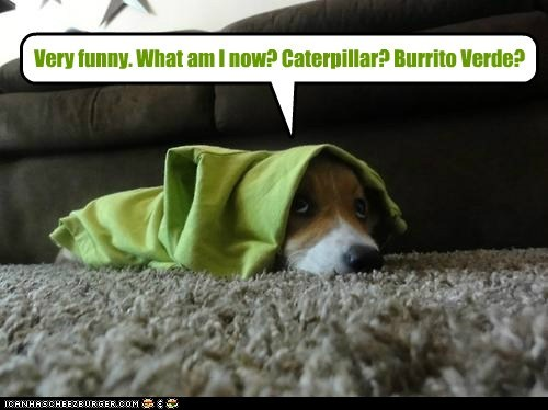 blanket,burrito,carpet,caterpillar,corgi,costume,dogs,green