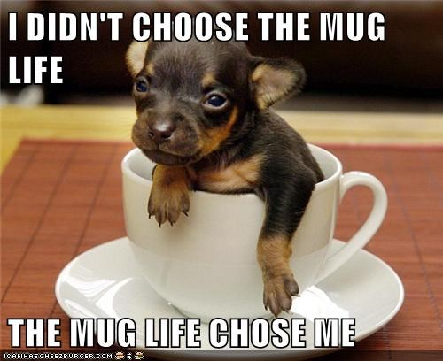 chihuahua,dogs,i-didnt-choose,mug,puppy,tea cup,thug life