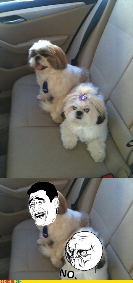 dogs no face rage faces the internets - 6493618176