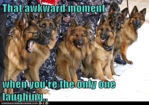 dogs german sheperd laughing only one snow that awkward moment - 6493985024