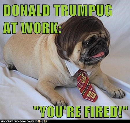 dogs,donald trump,neck tie,pug,toupee,wig,youre-fired