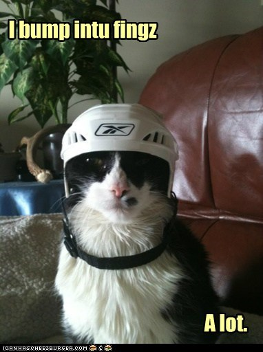bump captions Cats clumsy helmet klutz - 6494334464