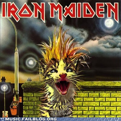 cat,iron maiden