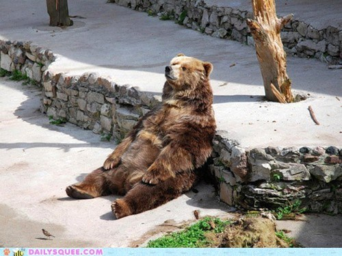 bear squee grizzly bear relaxing sunday