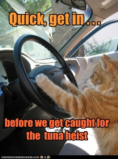 Quick, get in . . . before we get caught for the tuna heist
