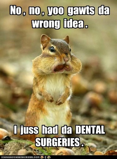 captions,chipmunk,cotton balls,dentist,mouth,nuts,stuffed,wrong idea