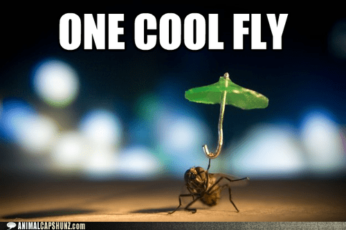 cool dancing fly pretty fly for a white gu umbrella - 6494947072