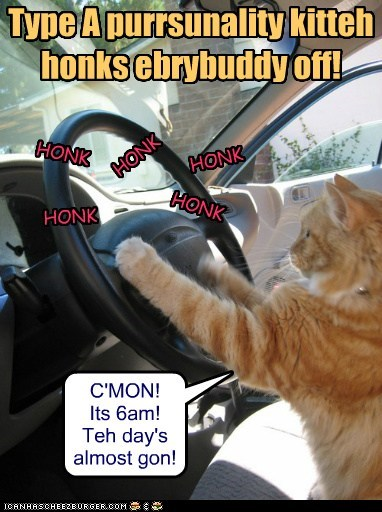 captions,car,Cats,drive,honk,road rage,type a personality