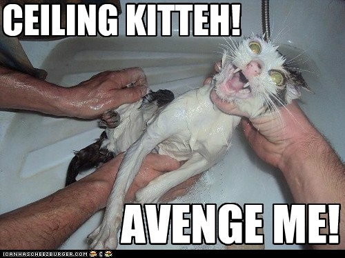bath,captions,Cats,ceiling cat,revenge,water,wet