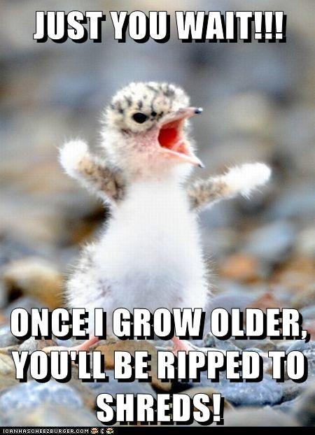 angry baby bird bird fuzzy threat yelling - 6495219456