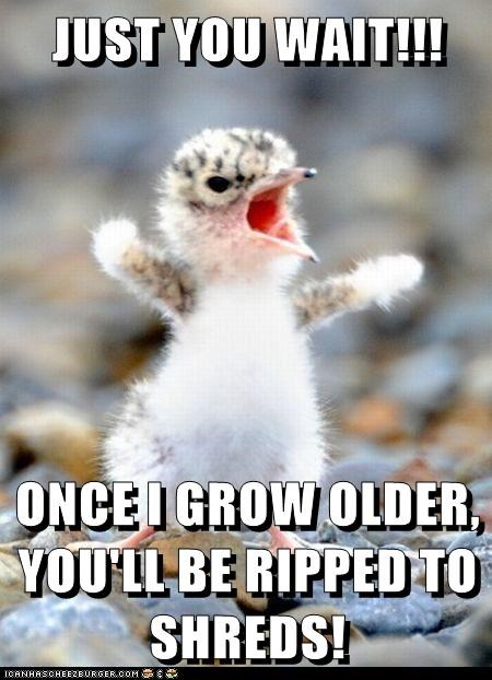 angry baby bird bird fuzzy threat when I grow up yelling - 6495219456